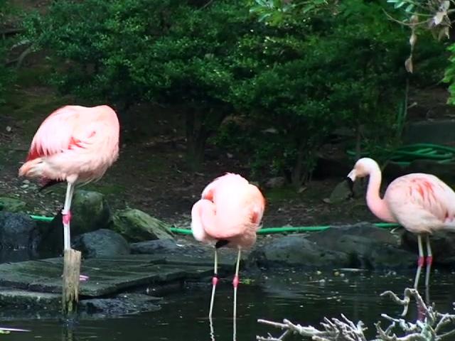 バーチャルひがしやま動物園&植物園